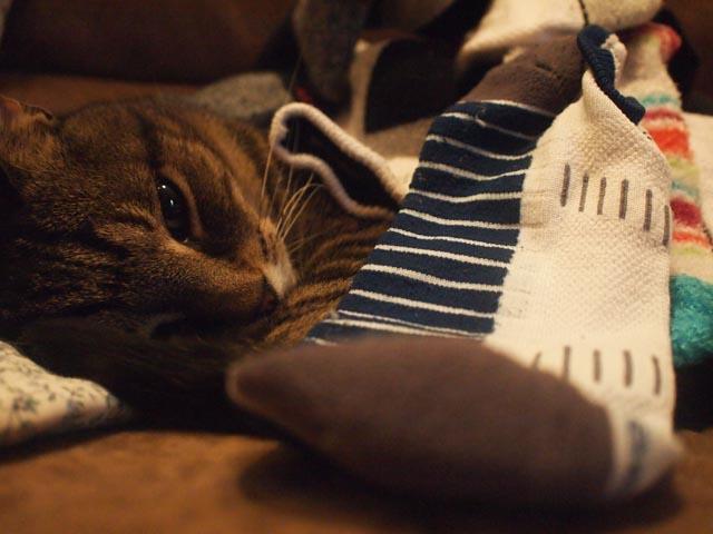 Socks On Jasper